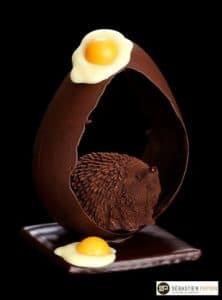 Papion chocolat